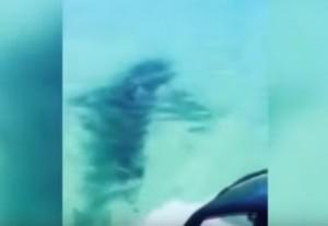 VIDEO YouTube, squalo attacca moto d'acqua: ragazza rischia