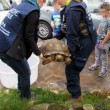 Roma, tartaruga di 40 chili in strada FOTO 3