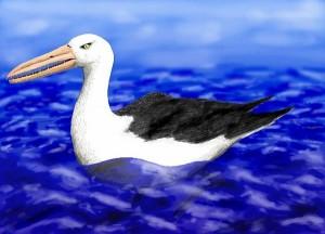 """YOUTUBE Uccelli preistorici: mistero sui """"draghi del mare"""""""