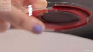 Guarda la versione ingrandita di VIDEO YOUTUBE Sangue e veleno di serpente: ecco cosa succede