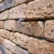 Illusione ottica, cosa si nasconde nel muro di mattoni2