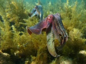 Mare con meno pesci e più cefalopodi. Colpa di pesca e...