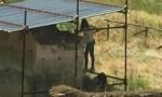 Pompei, turisti urinano tra scavi. FOTO indigna il web