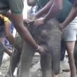 Elefantino nel pozzo: corda legata a zampa, salvo3