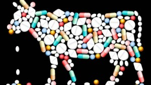 Antibiotici carne, su Report SOS pandemia: allevatori contro