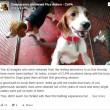 Beagle da laboratorio vedono prima volta la luce 9