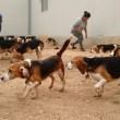 Beagle da laboratorio vedono prima volta la luce