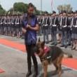 Cane poliziotto giura di essere fedele al padrone2