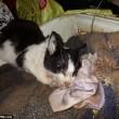 Casa piena di gatti e cani in decomposizione arrestata7