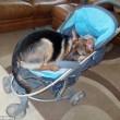 Cucciolo di cane si comporta come neonato4