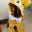 Cucciolo di cane si comporta come neonato3
