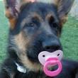 Cucciolo di cane si comporta come neonato8