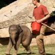 Elefantino sdraiato a terra, la mamma chiede aiuto3