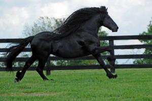 Frederick è il cavallo più bello del mondo13