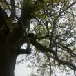 Gatto su albero, muso incastrato nel pacchetto patatine
