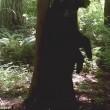 Orso in amore sfrega la schiena sull'albero 3