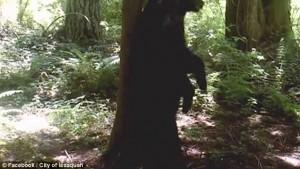 Guarda la versione ingrandita di YOUTUBE Orso in amore sfrega la schiena sull'albero