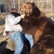Orso da 635 chili coccola custode zoo