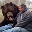 Orso da 635 chili coccola custode zoo 6