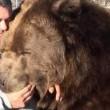 Orso da 635 chili coccola custode zoo 4