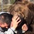 Orso da 635 chili coccola custode zoo 3