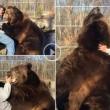 Orso da 635 chili coccola custode zoo 2
