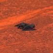 ipistrello atterra in campo, tennista lo soccorre3