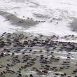 YOUTUBE Mongolia, vita da nomadi: la migrazione nella neve 3