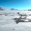 YOUTUBE Mongolia, vita da nomadi: la migrazione nella neve 4