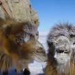 YOUTUBE Mongolia, vita da nomadi: la migrazione nella neve 6