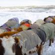 YOUTUBE Mongolia, vita da nomadi: la migrazione nella neve 8