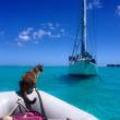Liz Clark e la sua gattina in barca in giro per il mondo FOTO 7