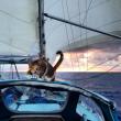 Liz Clark e la sua gattina in barca in giro per il mondo FOTO 10