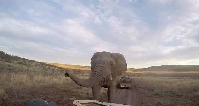 Selfie con elefante e l'animale6