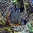 Uova uccello nel nido serpente arriva e se le ruba