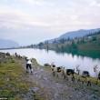 Vive un anno con le capre sulle Alpi svizzere
