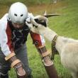 Vive un anno con le capre sulle Alpi svizzere6