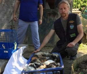Guarda la versione ingrandita di Strage di animali a Venezia: anatre e conigli uccisi a calci