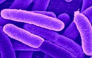 """Batteri resistenti a antibiotici: """"Più morti del terrorismo"""""""