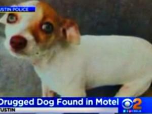 Bubba, cane tossicodipendente. Salvato da Polizia