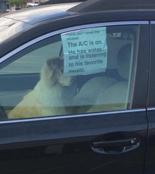 """Cane solo in auto con biglietto: """"Non rompete vetro..."""" FOTO"""