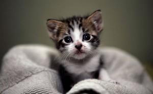 Gattini in un loculo del cimitero: la scoperta ad Ostiglia