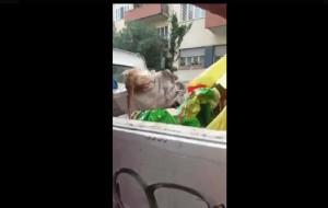 Guarda la versione ingrandita di Gattino gettato vivo tra rifiuti: salvato da operatori Ama