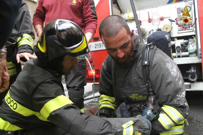 VIDEO YOUTUBE Incendio in casa, vigili rianimano gattino4