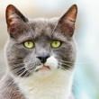 Collare fa parlare i gatti2