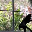Gatto vede uccello, salta contro finestra4
