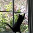 Gatto vede uccello, salta contro finestra3