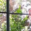 Gatto vede uccello, salta contro finestra