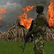 YOUTUBE Kenya, il più grande falò di avorio: 105 tonnellate03
