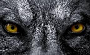 """Gb. """"Gira lupo mannaro a Hull"""": cittadini terrorizzati"""